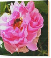 The Bee In The Rose Wood Print