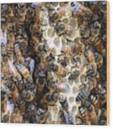 The Bees Hive It Wood Print