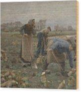 The Beet Harvest Wood Print