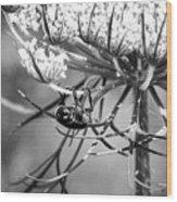 The Beetle Acrobat Black And White Wood Print