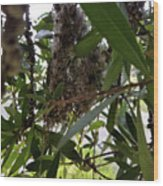 The Beginnings Of A Bushtit Nest Wood Print