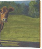The Belted Cow Wood Print