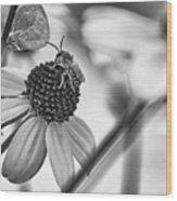 The Best Gardener - Bw Wood Print