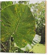 The Big Leaf Wood Print