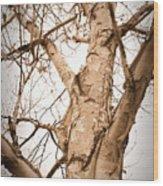 The Birch Wood Print