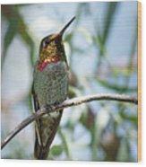 The Bird In The Foil Mask -- Anna's Hummingbird In Templeton, California Wood Print