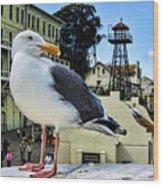 The Bird Of Alcatraz Wood Print