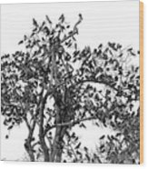 The Birds And The Tree Wood Print