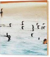 The Birds Santa Rosa Island Wood Print