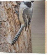 The Black Capped Chickadee Wood Print