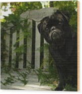 The Black Pug Marley Wood Print