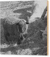 The Black Sheep Wood Print