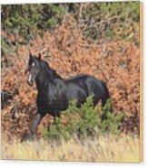 The Black Stallion Wood Print