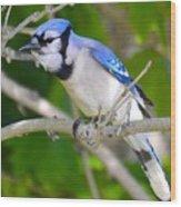 The Blue Jay Wood Print by Stephanie  Varner