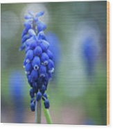 The Bluebells Of Destiny Wood Print
