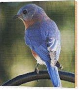 The Bluebird Wood Print