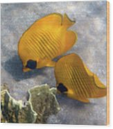 The Bluecheeked Butterflyfish Wood Print
