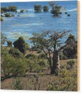 The Boabob Tree Wood Print