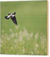 The Bobolink In Flight Wood Print