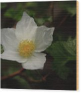 The Boulder Raspberry Flower Wood Print