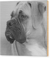 The Boxer Dog - The Gentleman Amongst Dogs Wood Print by Christine Till