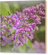 The Branch Of Lilac Wood Print