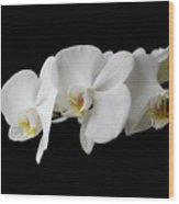 The Branch Of White Orchid On Black Background Wood Print
