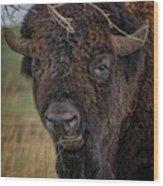 The Buffalo 2 Wood Print