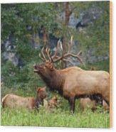 The Bugling Bull Elk Wood Print