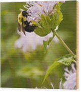 The Bumble Bee Wood Print