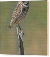 The Burrowing Owl Wood Print