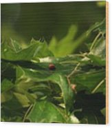 The Busy Lady Bugs Wood Print