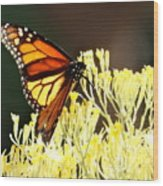 The Butterfly 2 Wood Print