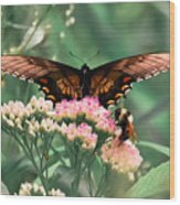 The Butterfly And The Bumblebee Wood Print