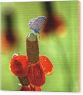 The Butterfly And The Coneflower Wood Print