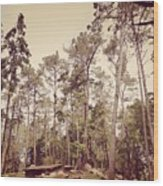 The Cabin In The Woods Wood Print