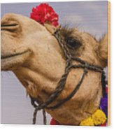 The Camel Beauty Wood Print