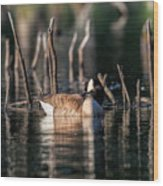 The Canada Goose Wood Print