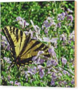 The Canadian Tiger Swallowtail Wood Print