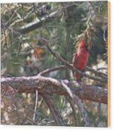 The Cardinal Wood Print