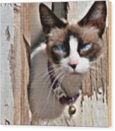 The Cat A Purrfect Carnivore Wood Print by Christine Till