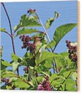 The Cedar In The Lilac Wood Print