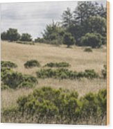 The Central Coast In May Wood Print