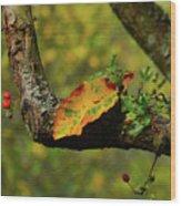 The Changing Season Wood Print