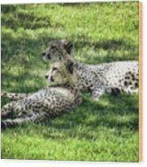 The Cheetahs Wood Print