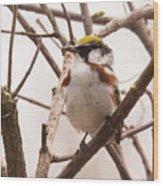 The Chestnut Warbler Wood Print