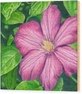 The Clematis Flower Wood Print