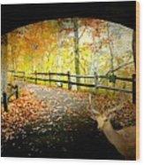 Under The Cobble Stone Bridge Wood Print