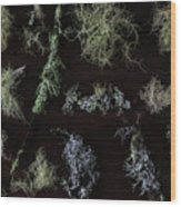 The Collection Of Lichens Wood Print