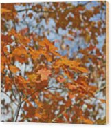 The Color Of Fall 1 Wood Print